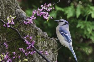 Bird on Tree, Close-Up by Gary Carter