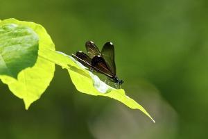 Damsel Fly by Gary Carter