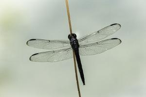 Dragonfly by Gary Carter