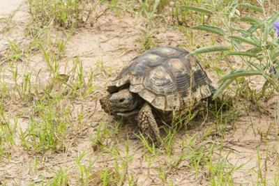 View of Texas Tortoise by Gary Carter