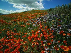 Colorful Field of Flowers by Gary Conner