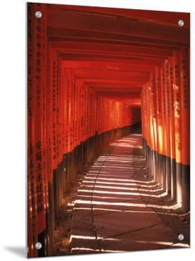 Fushimi-Inari Taisha Shrine, Japan by Gary Conner