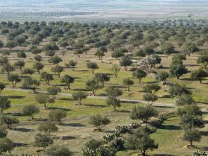Olive Groves on the Road Between Le Kef and Kairouan, Tunisia by Gary Cook