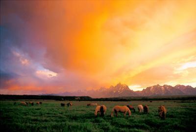 Teton Pony Herd by Gary Crandall