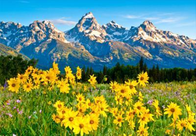 Teton Sunshine by Gary Crandall