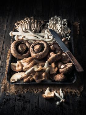 Assorted Mushrooms in Tray on Wooden Table by Gary Jones