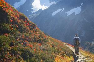 Backpacker on Trail, Huckleberry(Vaccinium Deliciosum), Washington,Usa by Gary Luhm