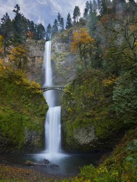 Multnomah Falls, Columbia Gorge, Oregon, USA by Gary Luhm