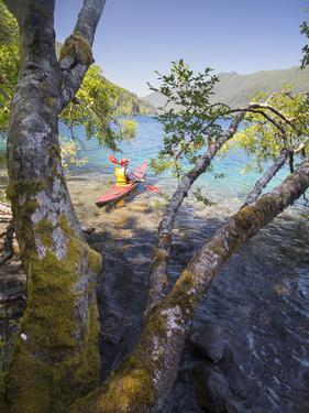 Sea Kayaker with Alder (Alnus Rubra), Crescent Lake, Washington, USA by Gary Luhm