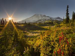 Starburst Setting Sun, Subalpine Wildflowers and Mt. Rainier at Mazama Ridge, Paradise Area by Gary Luhm