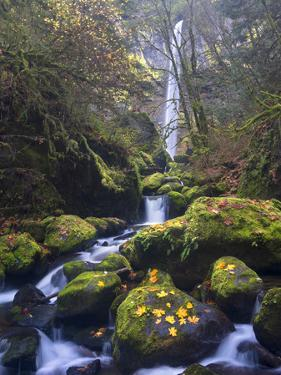 USA, Oregon. Autumn view of McCord Creek flowing below Elowah Falls in the Columbia River Gorge. by Gary Luhm