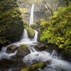 USA, Oregon. Spring view of McCord Creek flowing below Elowah Falls in the Columbia River Gorge. by Gary Luhm