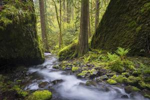 USA, Oregon. Spring view of Ruckle Creek in the Columbia River Gorge. by Gary Luhm