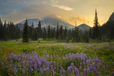 USA, Washington. Lupine and Mt. Rainie, Indian Henry's Hunting Ground