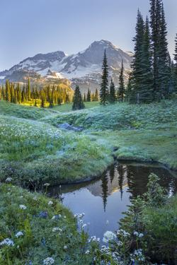 USA. Washington State. Mt. Rainier reflected in tarn amid wildflowers, Mt. Rainier National Park. by Gary Luhm