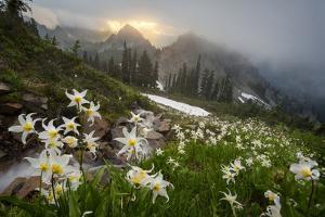 Washington, Mt. Rainier National Park by Gary Luhm