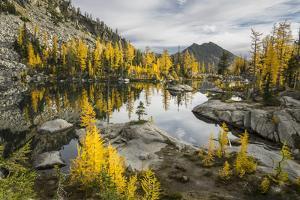 Washington, Subalpine Larch Surround Horseshoe Lake, Alpine Lakes Wilderness by Gary Luhm