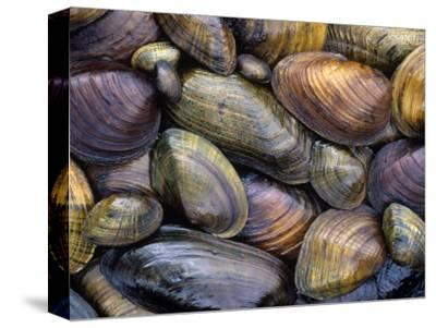 Freshwater Mussels from the Ohio River Drainage, USA