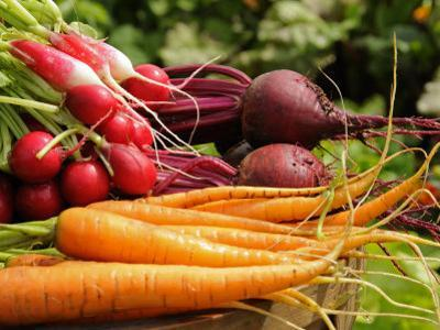 Freshly Harvested Carrots, Beetroot and Radishes from a Summer Garden, Norfolk, July by Gary Smith