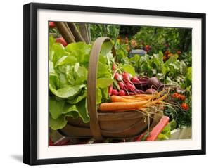 Freshly Harvested Carrots, Beetroot and Radishes in a Summer Garden, Norfolk, July by Gary Smith