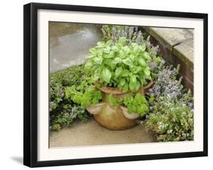 Herb Garden with Terracotta Pot with Sweet Basil, Curled Parsley and Creeping Thyme, Norfolk, UK by Gary Smith