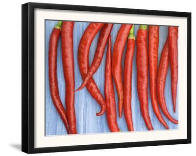 Red Chilli Peppers Chillies Freshly Harvested on Pale Blue Background by Gary Smith