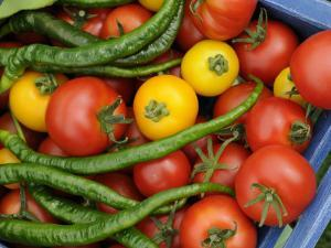 Summer Greenhouse Harvest of Tomatoes and Chillies in Rustic Trug, Norfolk, UK by Gary Smith