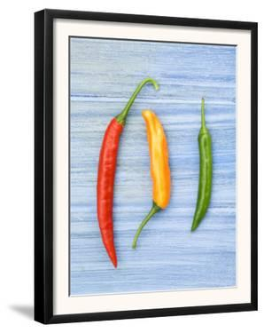 Yellow Red and Green Chilli Peppers Chillies Freshly Harvested on Pale Blue Background by Gary Smith