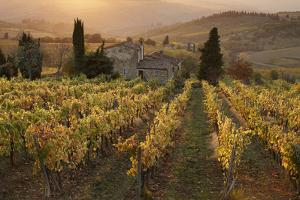 Farmhouse in Vineyard at Sunset by Gary Yeowell