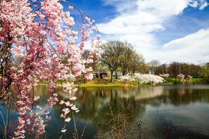 The Cherry Blossom Festival in New Jersey by Gary718