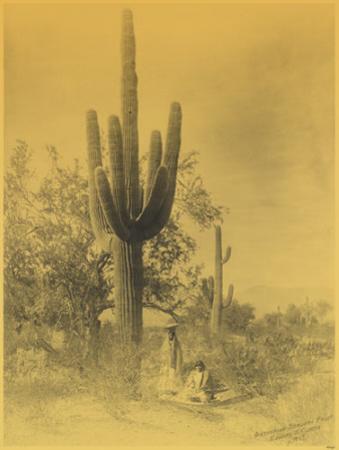 Gathering Saguaro Fruit