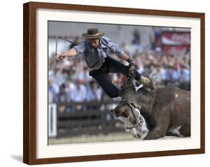 Gaucho, or Cowboy, is Thrown from a Horse as He Competes in a Rodeo in Montevideo