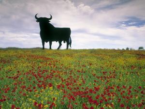 Bull Statue, Toros De Osborne, Andalucia, Spain by Gavin Hellier