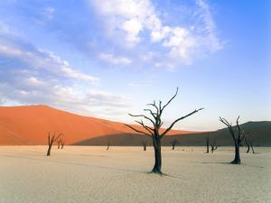 Dead Trees and Orange Sand Dunes by Gavin Hellier