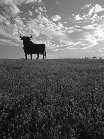 Giant Bull, Toros de Osborne, Andalucia, Spain by Gavin Hellier