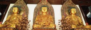 Medicine, Sakyamuni and Amithaba Gold Buddha Statues, Heavenly King Hall, Shanghai, China by Gavin Hellier