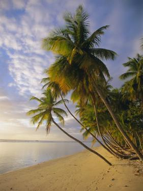 Palm Trees and Beach, Pigeon Point, Tobago, Trinidad and Tobago, West Indies by Gavin Hellier
