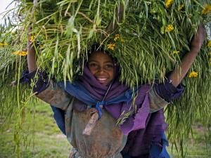 Portait of Local Girl Carrying a Large Bundle of Wheat and Yellow Meskel Flowers, Ethiopia by Gavin Hellier