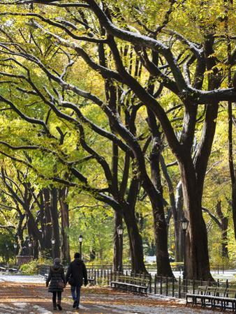 The Mall and Literary Walk with American Elm Trees Forming the Avenue Canopy, New York, USA by Gavin Hellier