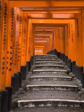 Torii Gates, Fushimi Inari Taisha Shrine, Kyoto, Honshu, Japan by Gavin Hellier