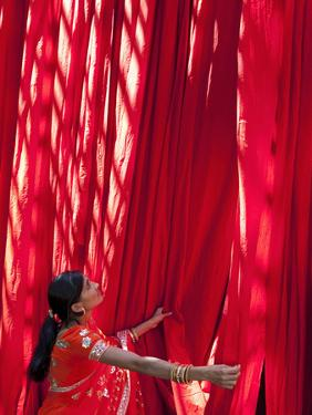 Woman in Sari Checking the Quality of Freshly Dyed Fabric Hanging to Dry, Sari Garment Factory, Raj by Gavin Hellier