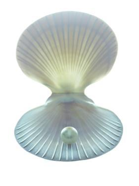Scallop Shell And Pearl by Gavin Kingcome