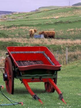 Farm Animals and Wheelbarrow, Kilmuir, Isle of Skye, Scotland by Gavriel Jecan