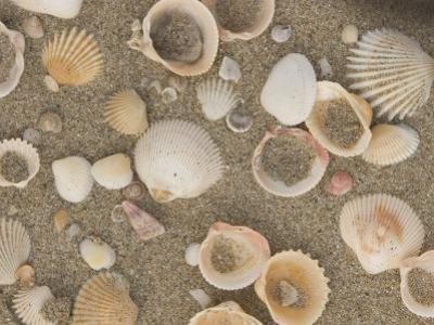 Shells on the Beach, Ko Chang, Thailand by Gavriel Jecan