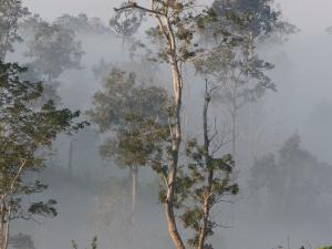 Tropical Rainforest on the Border of Burma and Thailand by Gavriel Jecan