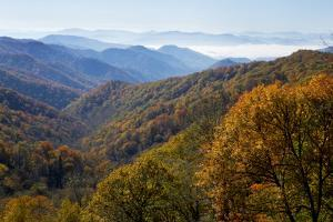 Autumn color in the valley, Great Smoky Mountain National Park, Tennessee by Gayle Harper