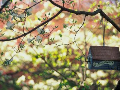 Backyard Bird Feeder, Birdhouse and Spring Flowers