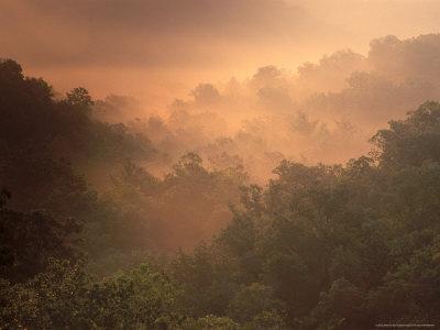 Morning Mist Amid Trees, Missouri, USA