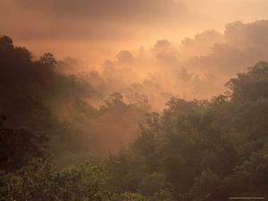 Morning Mist Amid Trees, Missouri, USA by Gayle Harper