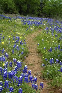 Texas Hill Country wildflowers, 'Willow City Loop' between Fredericksburg and Llano by Gayle Harper